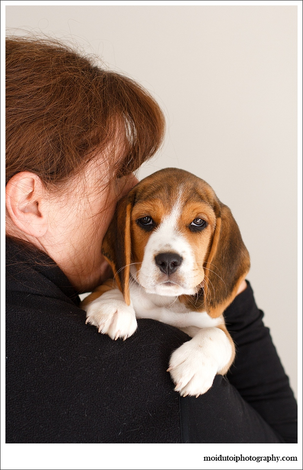 Beagle Puppy, pet photography, dog photography, cute puppy, beagle puppy photography Sedgefield, Western Cape