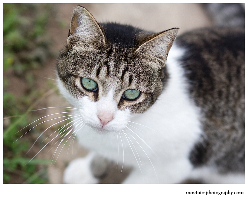 Cat photography sedgefield