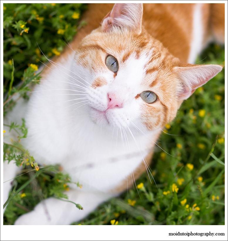 cats-4687