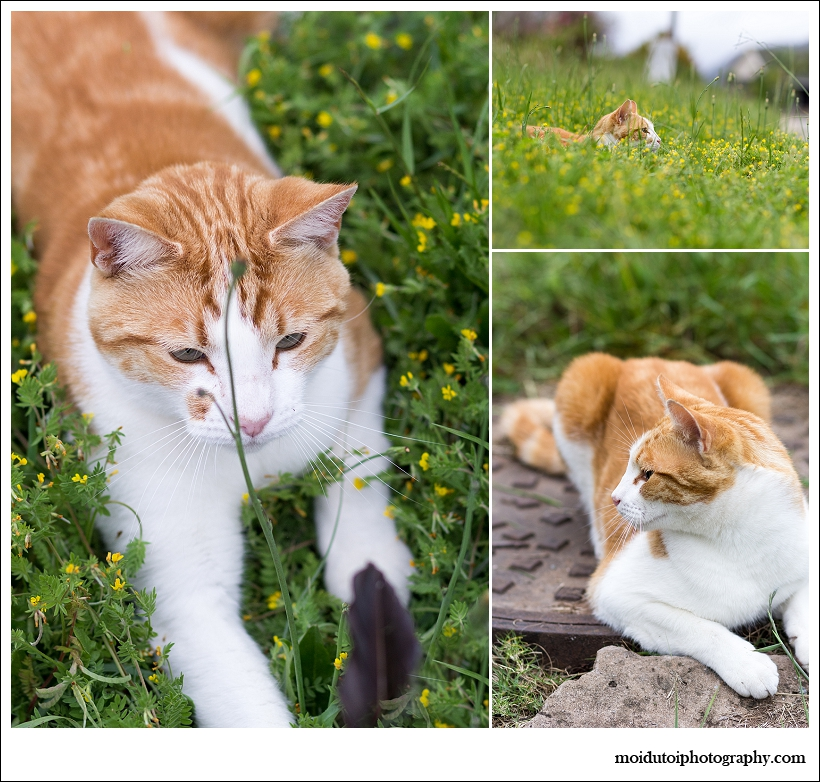 Cat photography, natural light, sedgefield