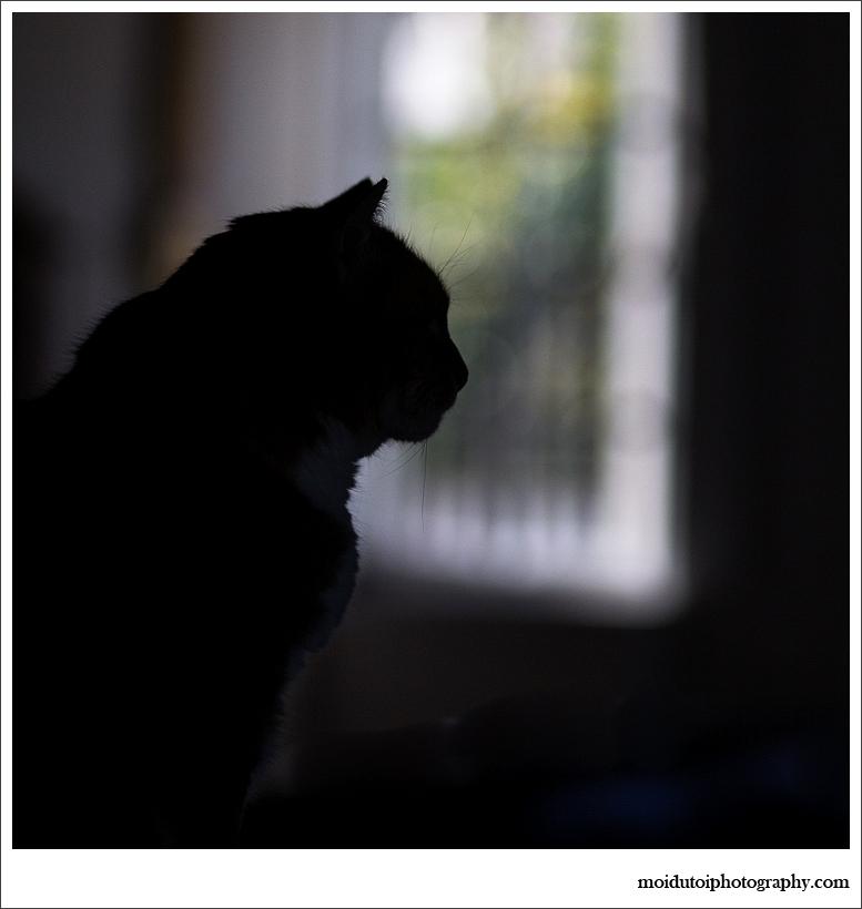 cat silhouette-3230