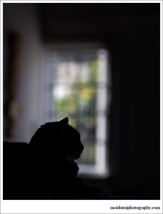 cat silhouette, pet photography, moi du toi photography, patchouli