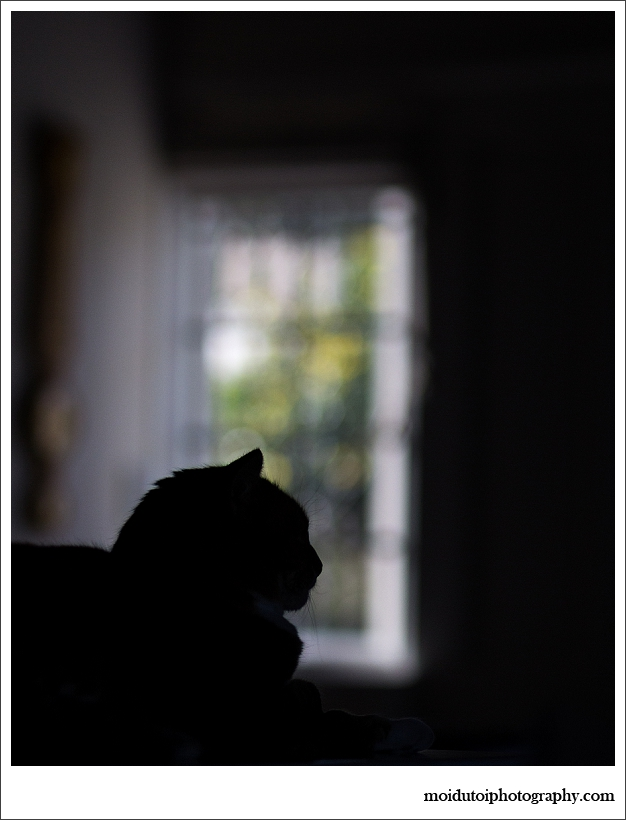 cat silhouette, pet photography, moi du toi photography, patchouli