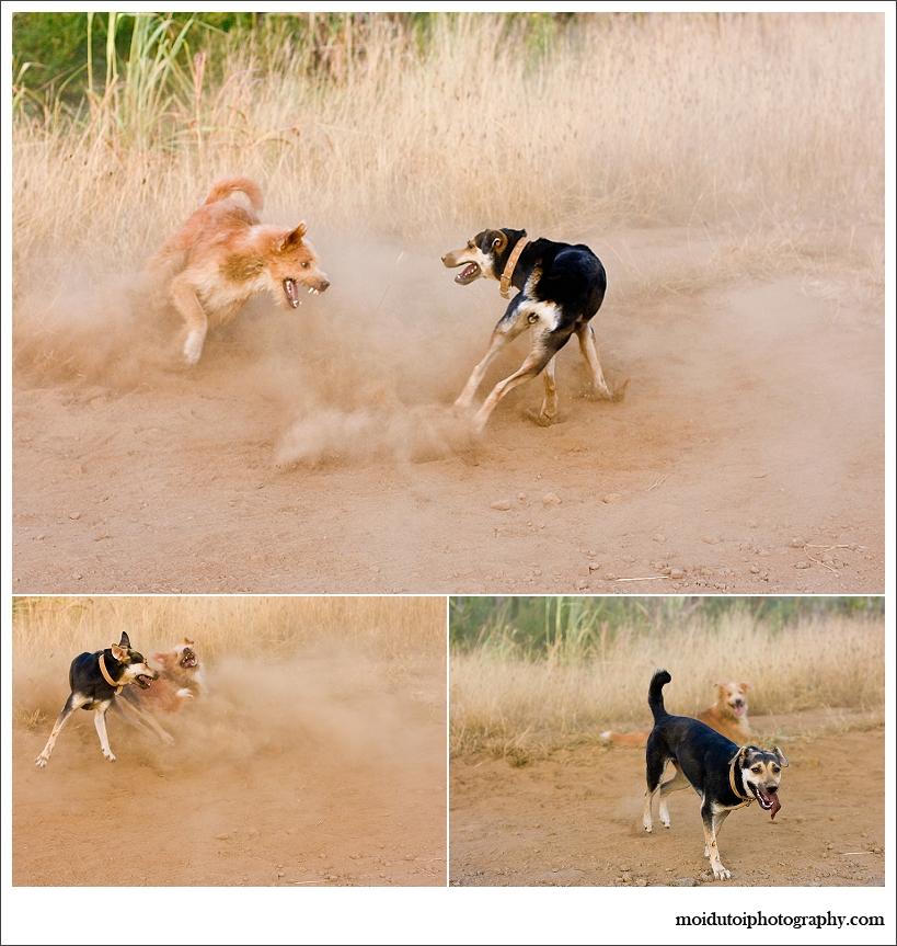 Odie & Fibi playing
