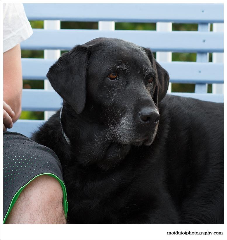 Black Labrador, pet photography, Western Cape Pets