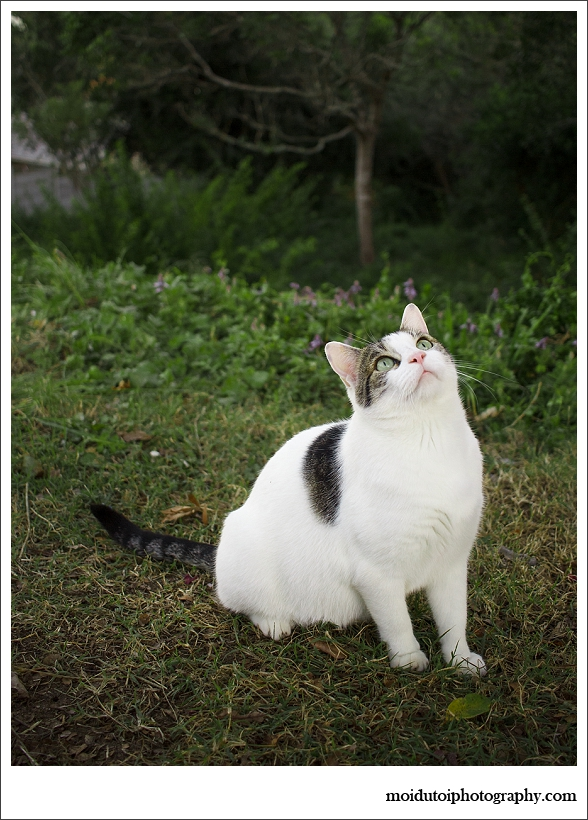 Cat stalk-0675