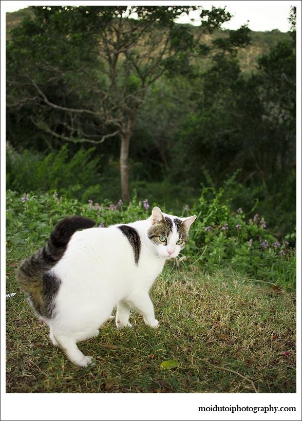 pet photographer, cat photographer, western cape, moi du toi photography, the incremental photographer