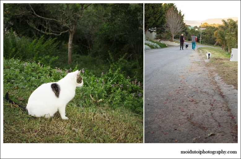 Cat stalk-0688