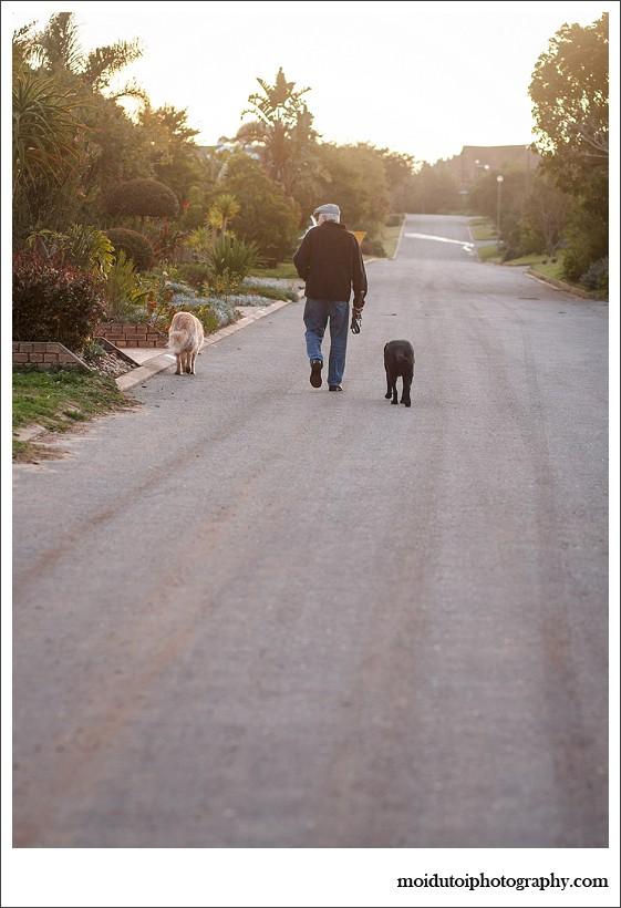 pet photography, pet photographer western cape, moi du toi photography, dog photos, golden retriever, sedgefield, online photography class
