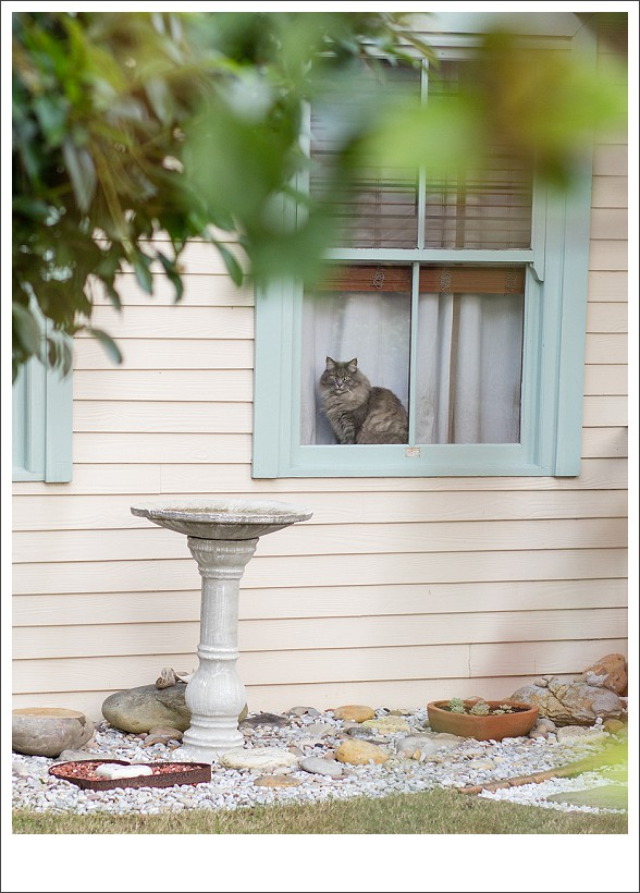 Cat photography south africa, pet photographer, moi du toi photography, cat sitting in a window, natural light animal photography