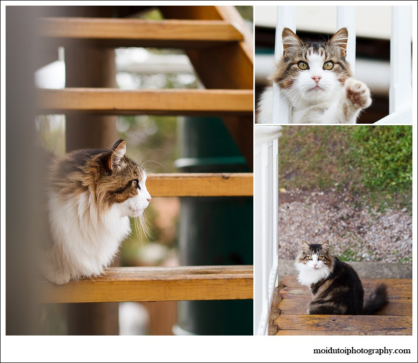 Cat photography, online photography class, Aine, moi du toi photography, easy photography lessons, pet photographer south africa, beautiful fluffy cat with eye make up