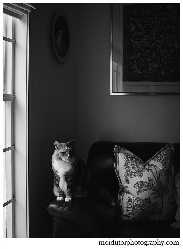 chiaroscuro, portrait, cat at window