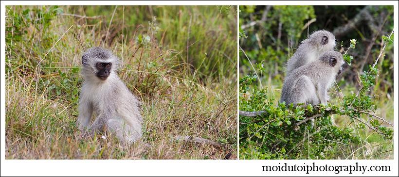 Addo elephant national park, South African wildlife, moi du toi photography