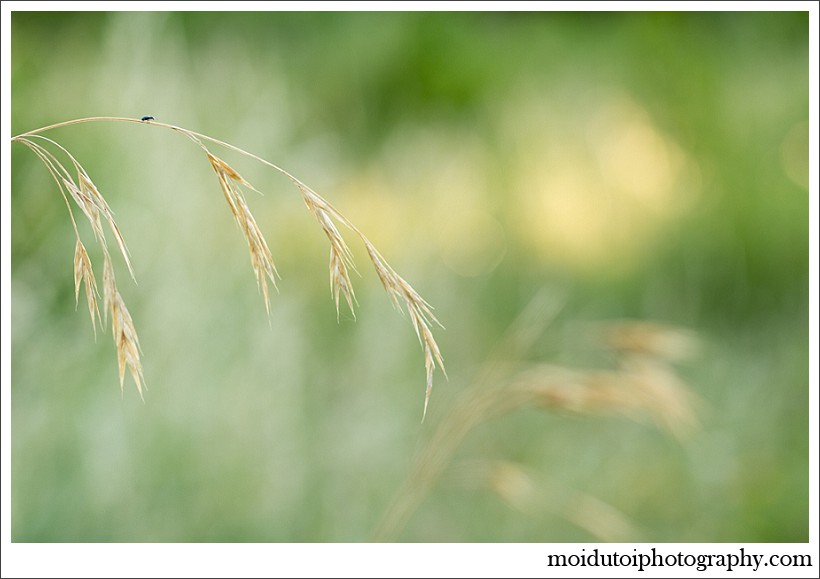 moi du toi photography, beautiful images, western cape photographer