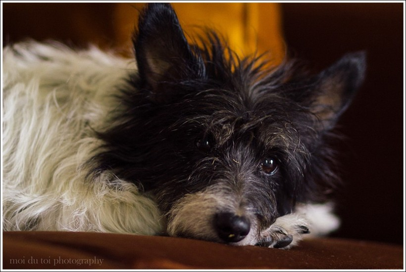 online photography classes, poetry, dog photography, moi du toi photography, photography tips and advice