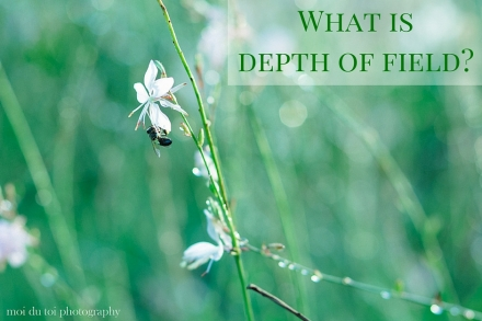 For Beginners - An introduction to depth of field. When I first began to learn how to photograph all I wanted to do was take a shallow depth of field photograph with a blurred background but I didn't know how. To learn more on this subject click this link: http://wp.me/p2e0Yp-1DR #photographytips | @moidutoi