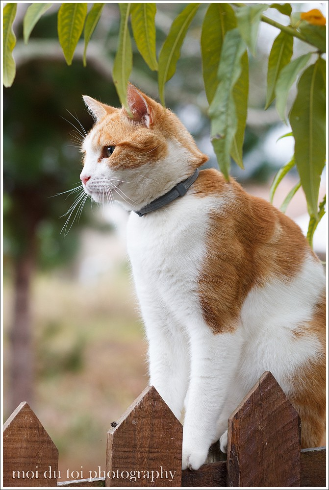 Ginger cat portrait in natural light