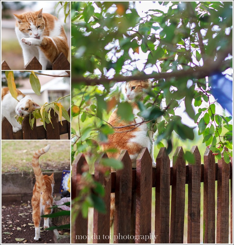 Collage of ginger cat natural light
