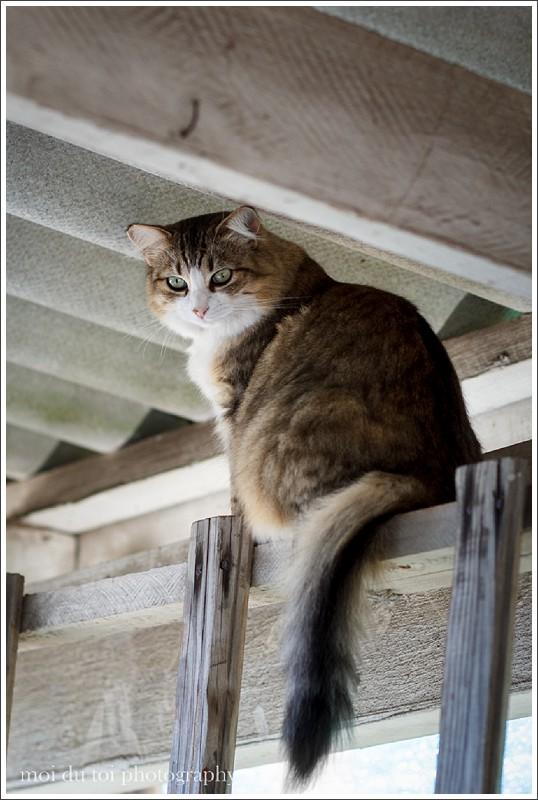 nursery cats-3540