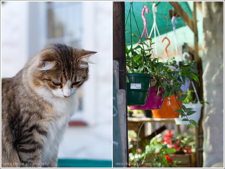 nursery cats-3658