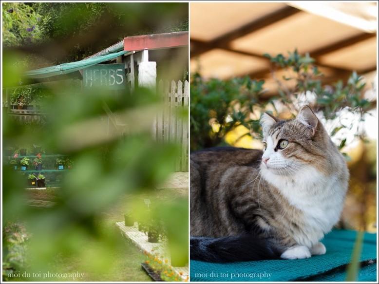 nursery cats-