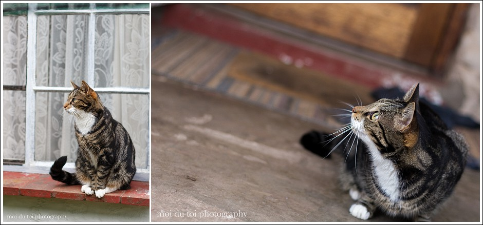 nursery cats-3888