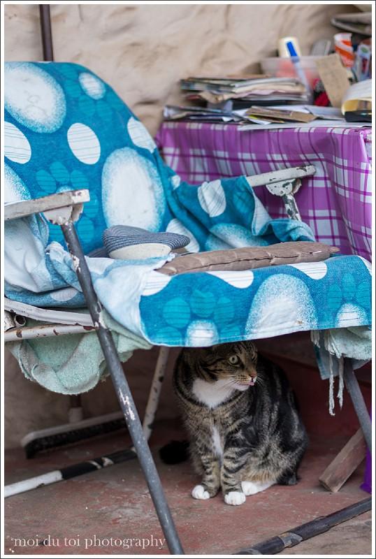 nursery cats-3935