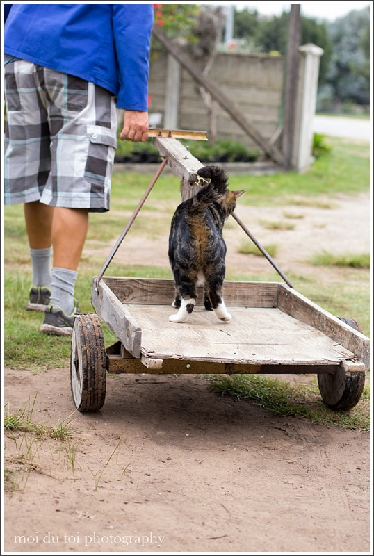 Cat riding on a trolley see more at http://wp.me/p2e0Yp-1KB |@moidutoi