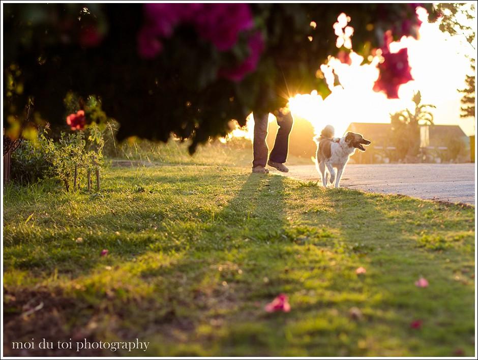 Dog at sunset