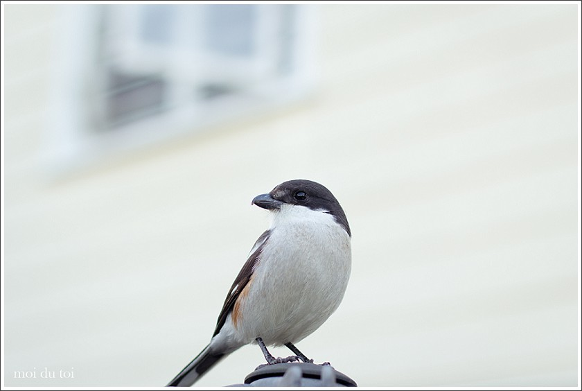 moi du toi photography, shrike #sedgefield photographer