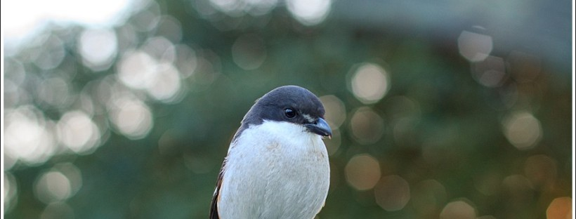 #sedgefield photographer moi du toi photography, shrike,