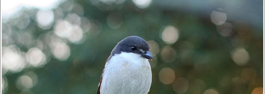 #sedgefield photographer moi du toi photography, shrike,