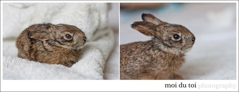 Hare-6659