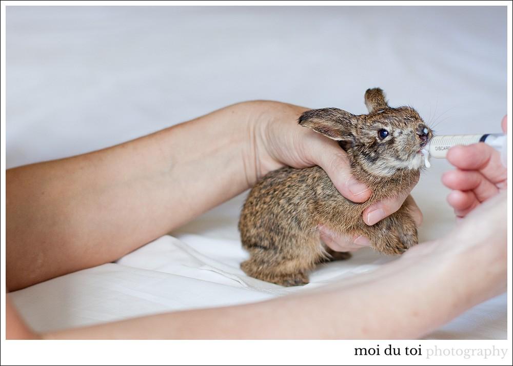 Hare-6893