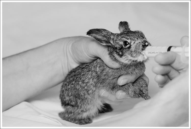 Hare-6896