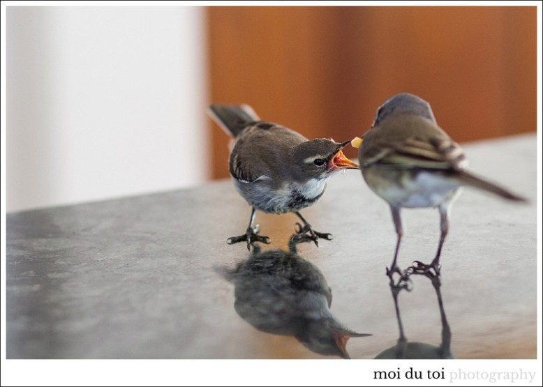 pet photographer, wagtail, moira du toi