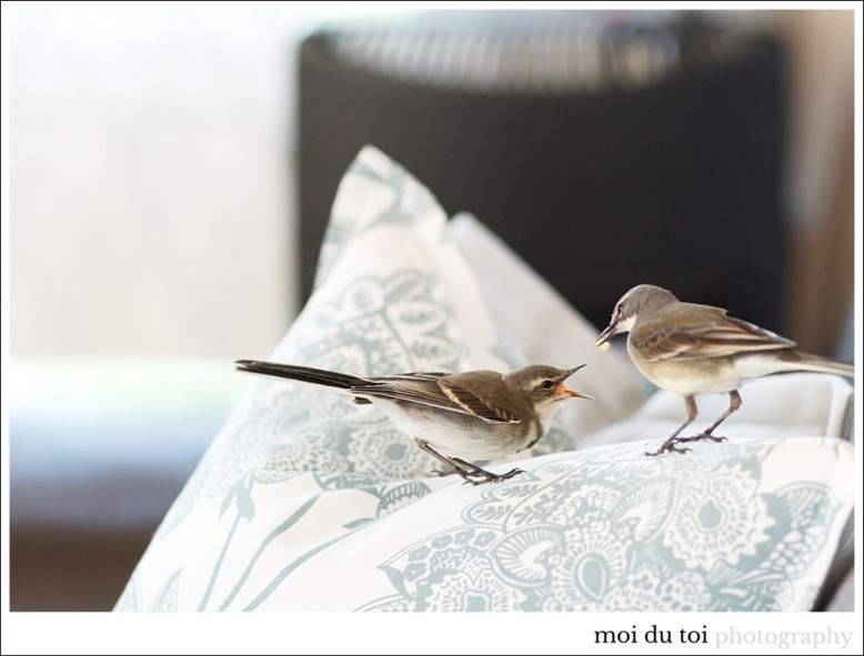 pet photographer sedgefield, birds, wildlife, moira du toit