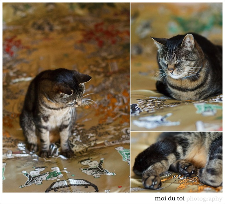 bouvier-cat-5276