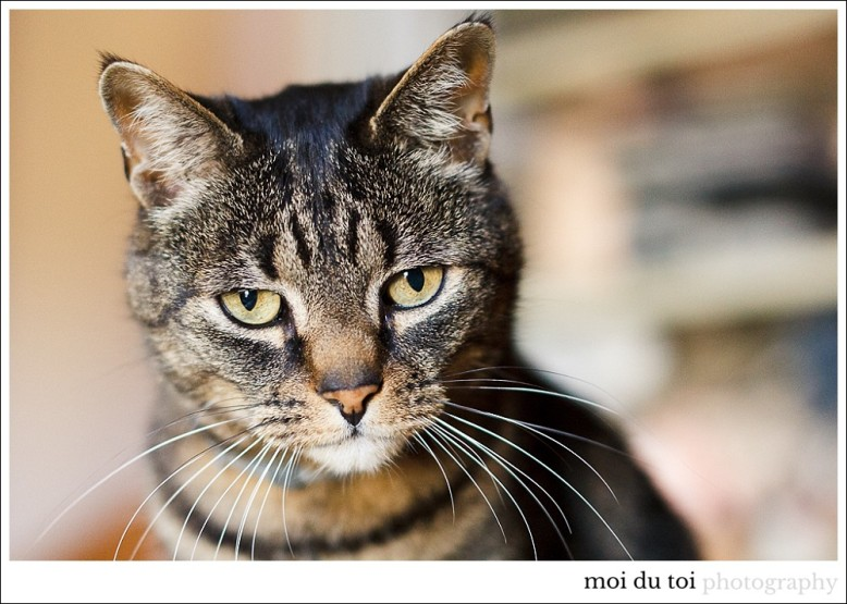 bouvier-cat-5290