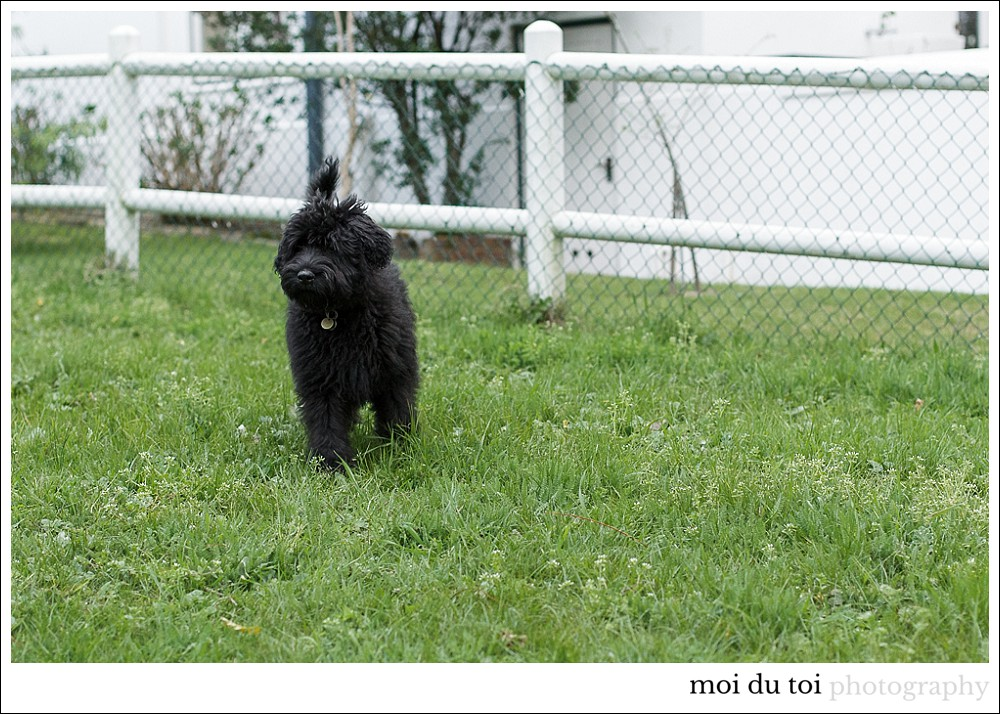 bouvier-cat-5762