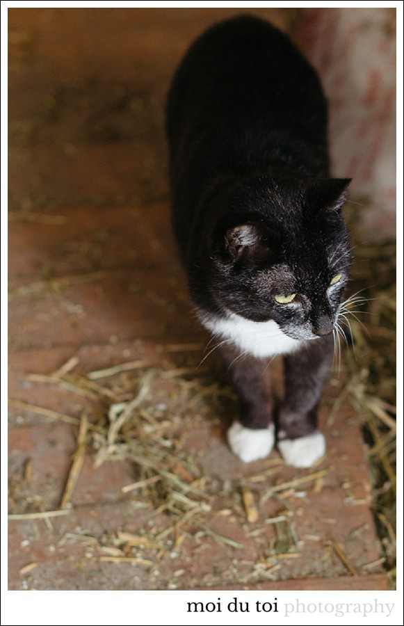 #Cat photography #Sedgefield Photographer #garden route photographer #pet photography