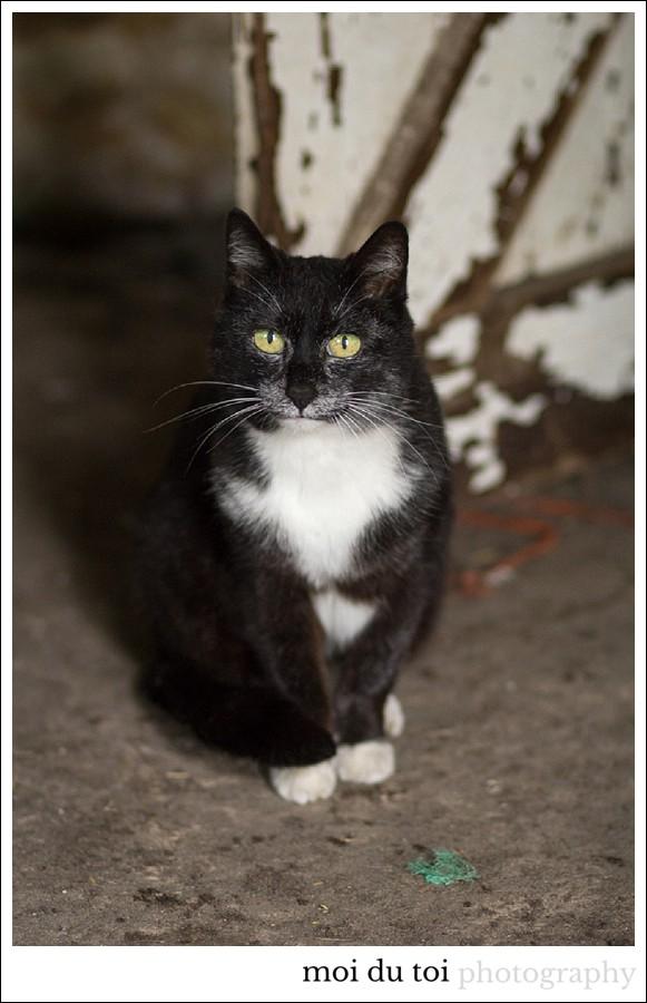 #Cat photography #Sedgefield Photographer #garden route photographer #pet photography