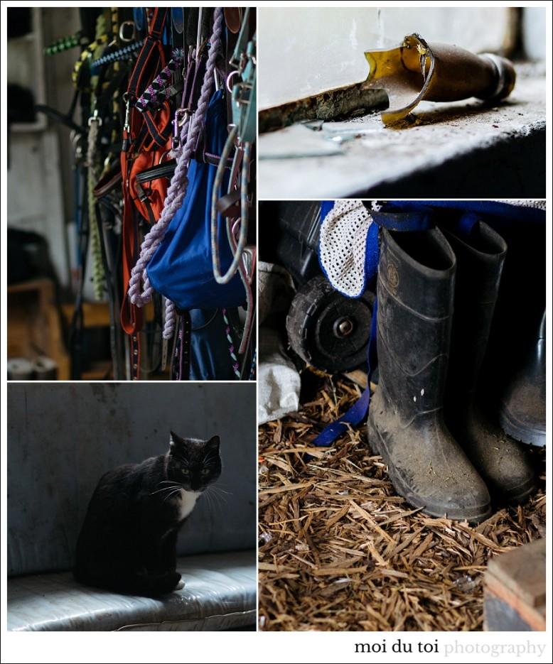 catphotography-6913
