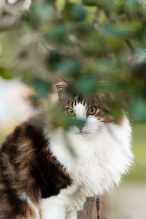 #moidutoiphotography #catphotography #sedgefield photographer #knysna photogapher #george photographer #gardenroute photographer