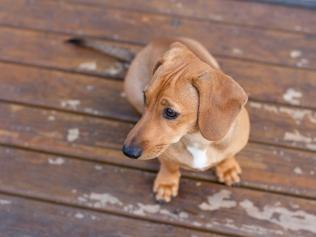 moi-du-toi-photography-dog-portraits-0874