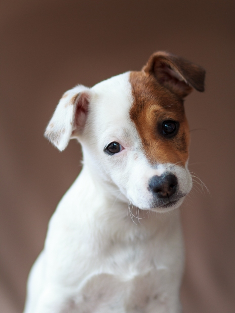 moi-du-toi-photography-dog-portraits-1445