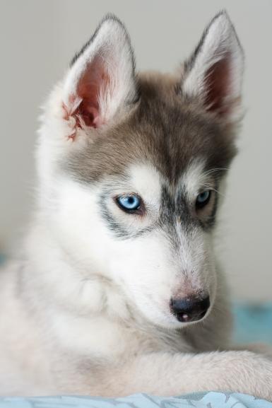 moi-du-toi-photography-dog-portraits-2099