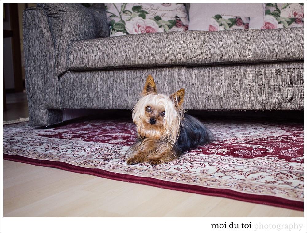 garden route photographer #yorkshire terrier