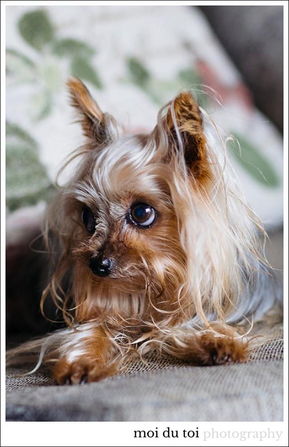 moidutoiphotography-pet-photography-7455b