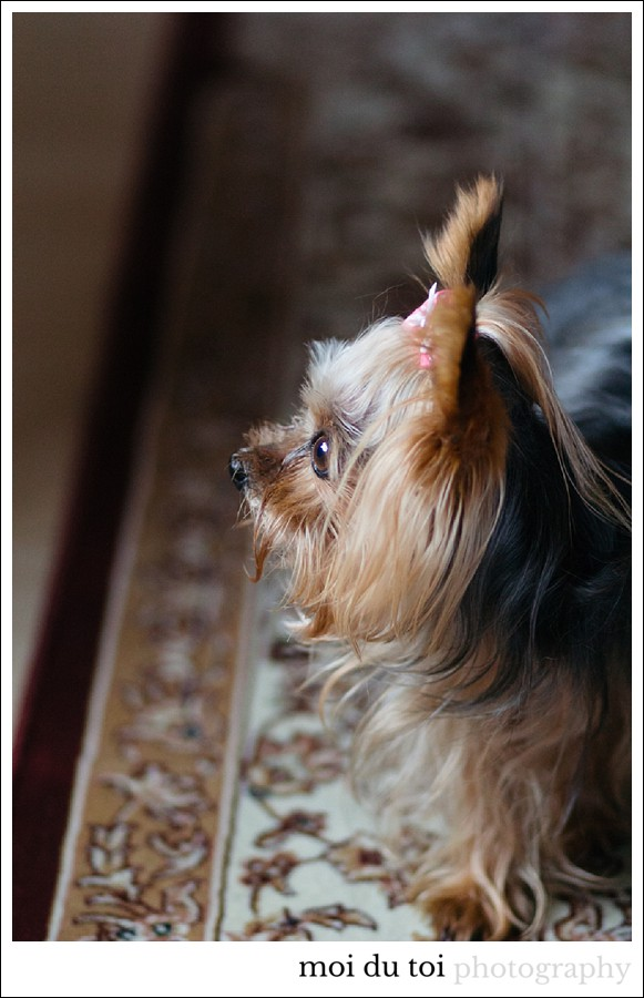 moidutoiphotography-pet-photography-7712